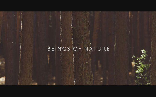 trailer-video-danza-zukdance-beings-of-nature
