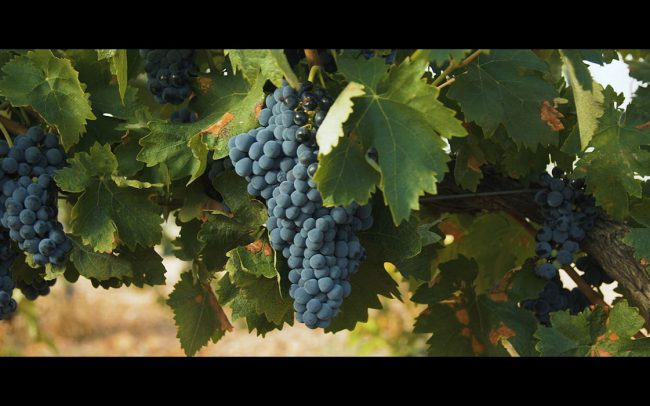 corporativo-premios-empresas-triodos-bank-2018-parrafamily-vino-ecologico